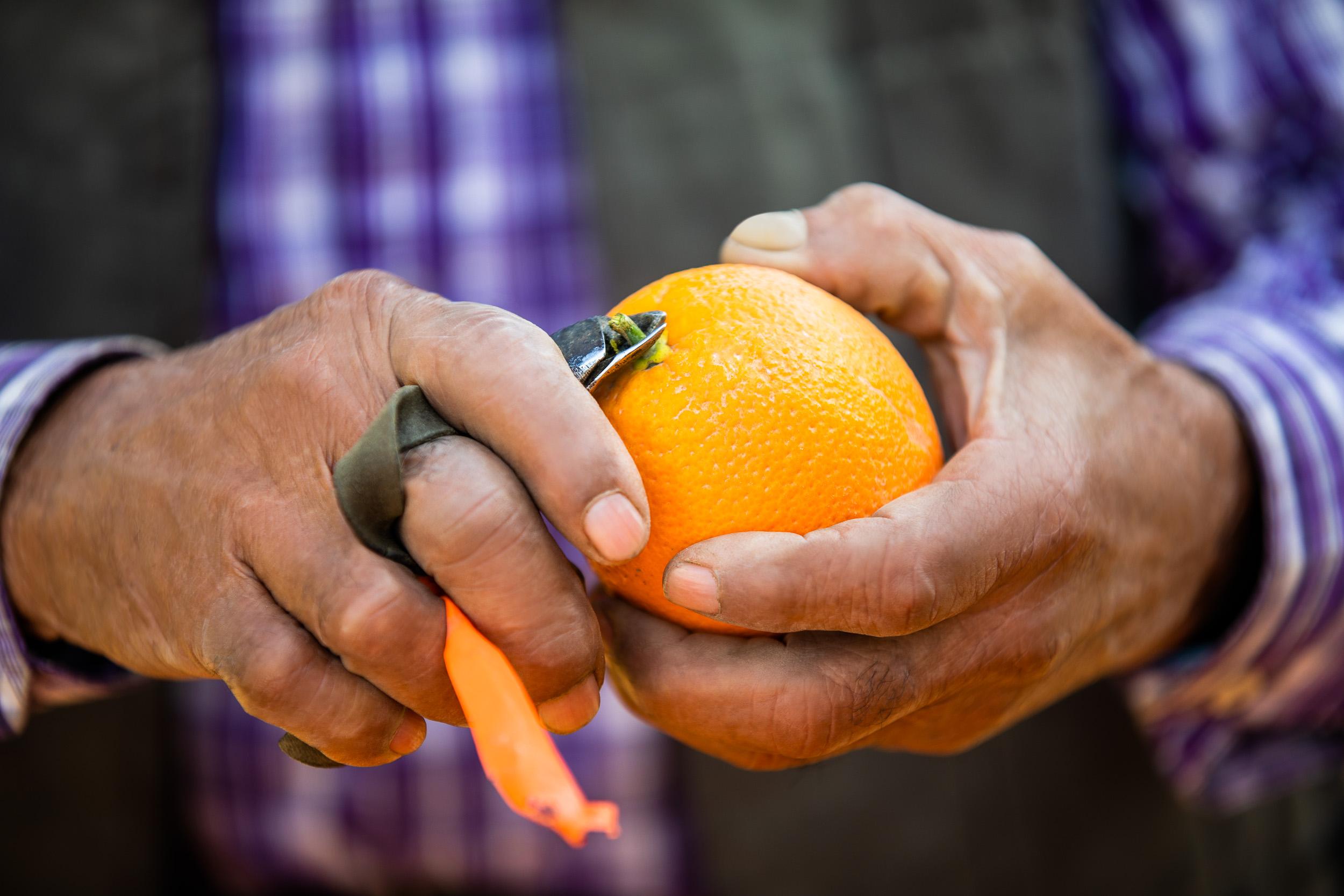 GeoffJohnson_Agriculture_BayerCitrus_02